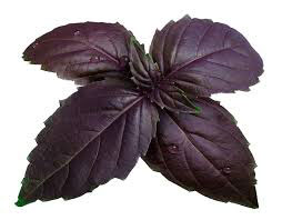 Basil, Purple